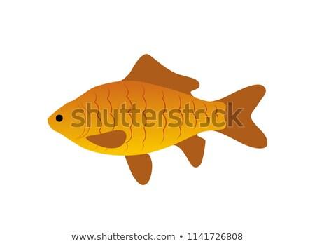 Piros zebra hal ikon közelkép állat Stock fotó © robuart