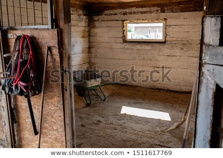 Empty stable for racehorses with small window, worktools and cart Stock photo © pressmaster