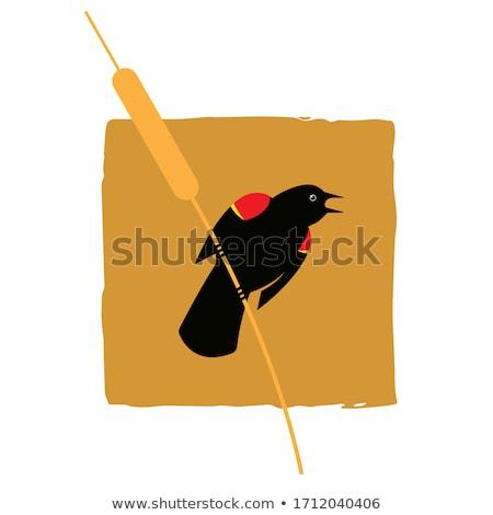 melro · ramo · vermelho · natureza · aves · animal - foto stock © stockfrank