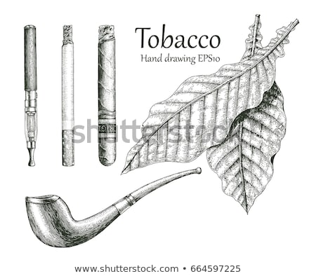 Pipe with tobacco leaves Stock photo © mayboro