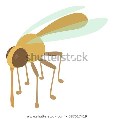 Malaria Mosquito isometric icon vector illustration Stock photo © pikepicture