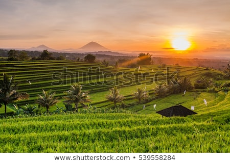 Arrozal bali Indonésia casas paisagem tropical Foto stock © travelphotography