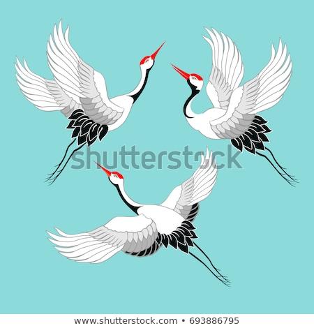 vector asian bird stock photo © sdmix