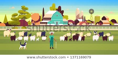 Koyun alan çim hayvan tarım kuzu Stok fotoğraf © njnightsky