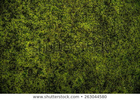 fresh moss in green nature stock photo © sweetcrisis