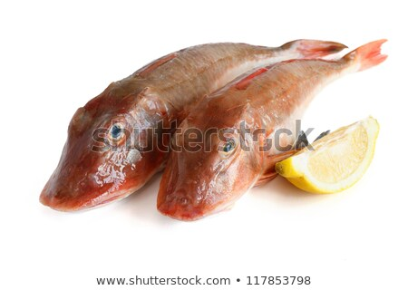 two tub gurnard fish stock photo © antonio-s