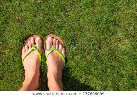 hierba · par · campo - foto stock © mtkang