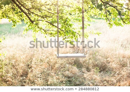 empty swing hanging from a tree on romantic stock photo © ruslanomega