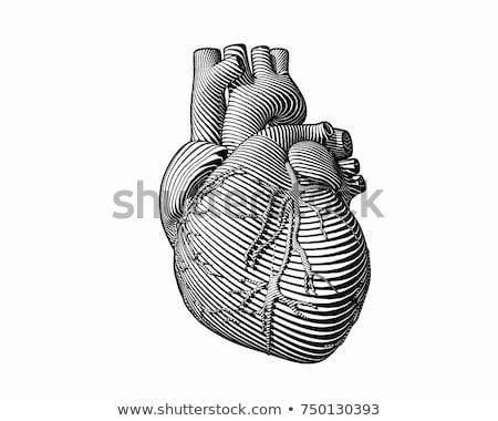 Kalp organ Retro örnek yalıtılmış beyaz Stok fotoğraf © patrimonio