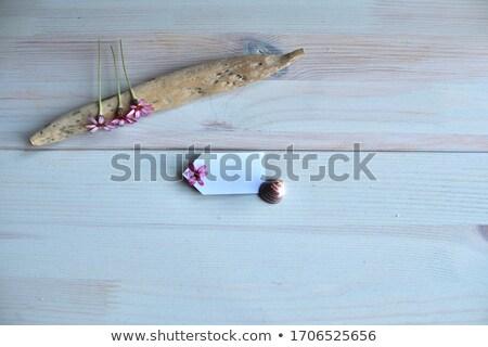 Driftwood tag biały kopia przestrzeń znacznik charakter Zdjęcia stock © Nelosa