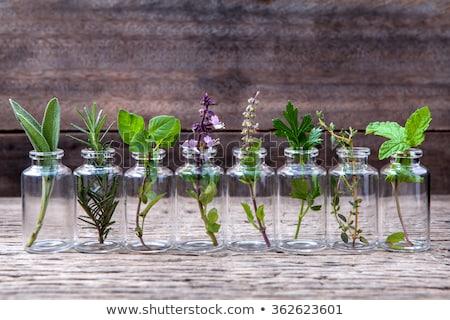 Zsálya gyógynövény virágok virág levél foltos Stock fotó © marilyna