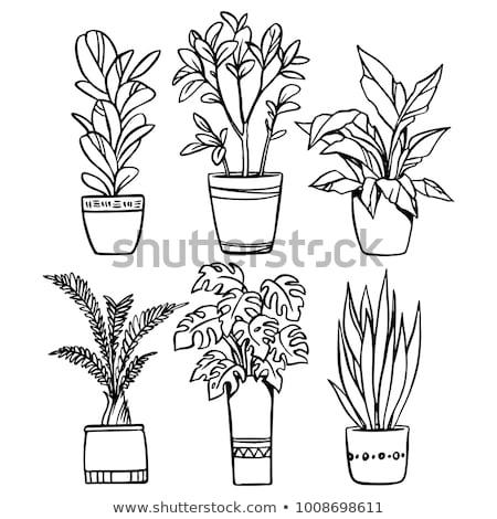 Doniczka kwiat stół kuchenny roślin biały rysunek Zdjęcia stock © stevanovicigor