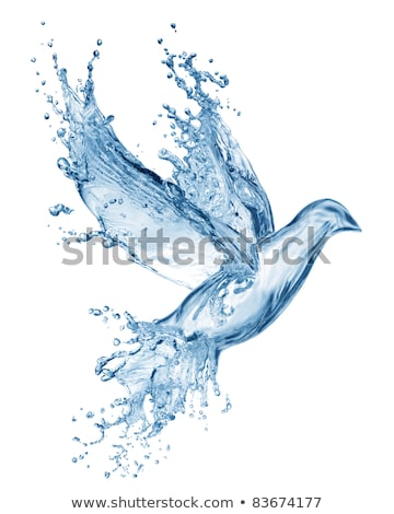 Stock photo: water birds