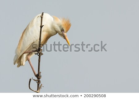 Vee naar beneden te kijken vogel afrika mooie natuurlijke Stockfoto © davemontreuil