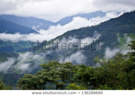 cloud forest in ecuador stock photo © ildi