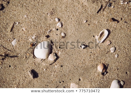 Pierres roches plage de sable texture nature Photo stock © chrisga