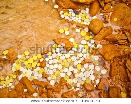 Sáros citromsárga folyó Colorado magas vidék Stock fotó © emattil