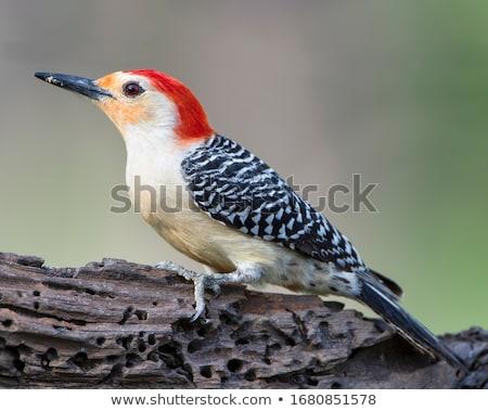 Férfi eszik madár mag fából készült posta Stock fotó © brm1949