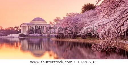 Flor de cerezo festival presidente EUA principal declaración Foto stock © rmbarricarte