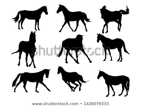 preto · e · branco · imagem · cavalo · perfeito · livros · não - foto stock © istanbul2009