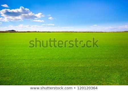 Grasveld beneden bush zomer natuur Stockfoto © Fotografiche