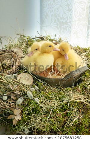 three easter eggs with soft focus in grass Stock photo © Rob_Stark
