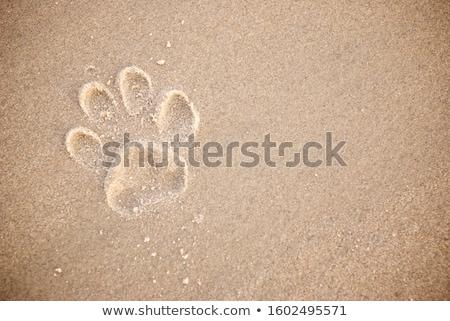 cão · pata · areia · conjunto · três · praia - foto stock © 5xinc