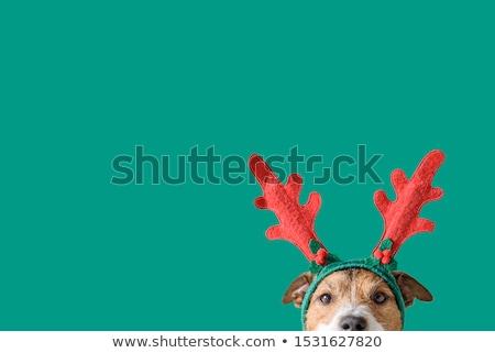 hond · christmas · decoratie · kaas · wijn · voedsel - stockfoto © cynoclub