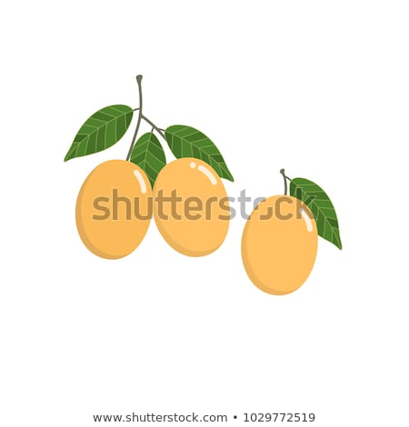 Zoete pruim thai vruchten geïsoleerd witte Stockfoto © ungpaoman