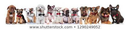 Csapat sok boldog úriemberek kutyák áll Stock fotó © feedough