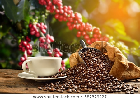groene · koffiebonen · blad · koffie · dieet · concept - stockfoto © boggy