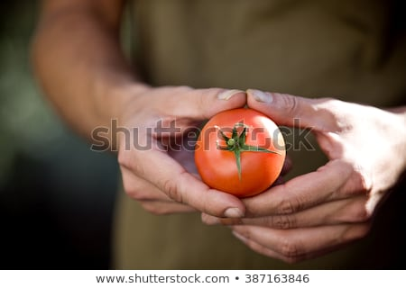 Close Up Of Man Holding Home Grown Tomatoes Stock photo © HighwayStarz