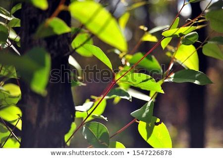 árvores novo folhas arbusto verde Foto stock © lovleah