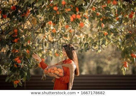 Mulher maduro tangerina árvores cítrico menina Foto stock © ElenaBatkova