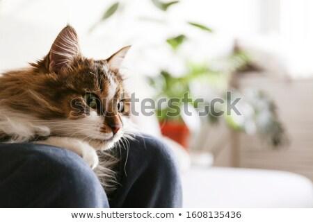 Femme kitty jeunes femmes maison cuisine Photo stock © val_th