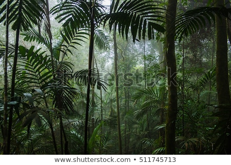 Rainforest orman resim bakıyor bereketli Stok fotoğraf © mtilghma