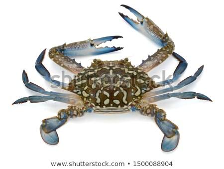 Stock photo: crab carapace