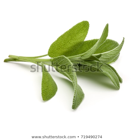 makro · kişniş · ot · bitki · yaprakları · yalıtılmış - stok fotoğraf © backyardproductions