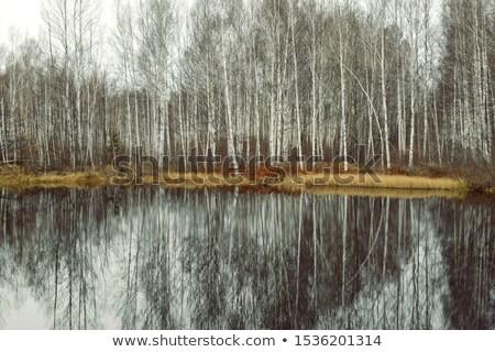 Late autumn on  a river. Stock photo © lypnyk2