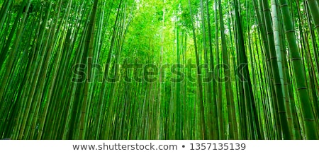Bamboe bos verticaal lijnen verlicht groene Stockfoto © kenishirotie