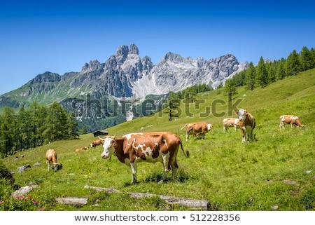 Stock fotó: Alpesi · tájkép · tehenek · Franciaország · tavasz · égbolt