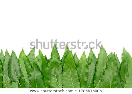 Green leaves top and bottom Stock photo © vavlt