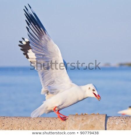 Zeemeeuw eten beton brug hemel natuur Stockfoto © tungphoto