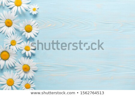 camomila · cair · folha · fundo · beleza · verão - foto stock © thomaseder