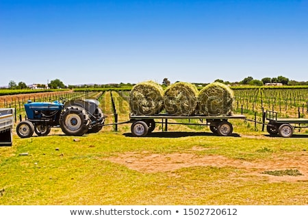 Hay bale side view Stock photo © creisinger