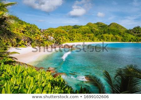 красивой · тропический · пляж · пышный · растительность · песок - Сток-фото © juniart