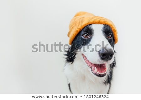 grappig · hond · pruik · vrede · bril · witte - stockfoto © willeecole