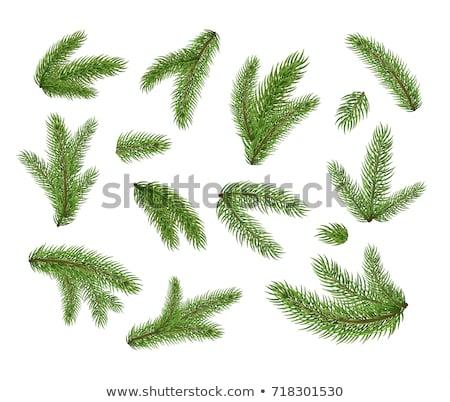 Zöld ág karácsonyfa fehér természet terv Stock fotó © tarczas