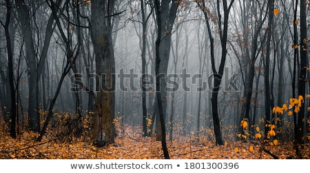 foggy autumn forest leaves stock photo © chris2766