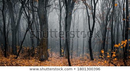 Sonbahar orman yaprakları gün renkli Stok fotoğraf © chris2766
